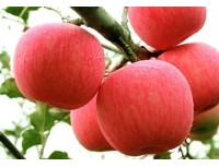 Apple P.E.